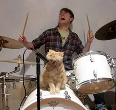 This is one cool cat, I wish my kitty sang in a rock band! LOL!!! What would be a good name for a cat band?  Motley Cat, Caterella, Metallicat, etc...