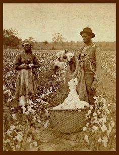 SLAVES, EX-SLAVES, and CHILDREN OF SLAVES IN THE AMERICAN SOUTH, 1860 -1900 (12)