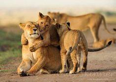 I love you mom! Picture taken in the Maasai Mara, Kenya by Sarah Skinner.