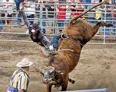 bull riding at rodeo