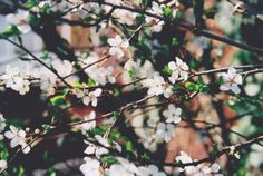 whiteblossoms by {this is glamorous}, via Flickr