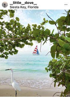 Sarasota Florida, Florida Vacation, Siesta Key Beach, Desktop Photos, Beach Place, Fort Myers, God Bless America, Heaven On Earth, Key West