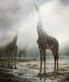 """These exquisite photographic works by Simen Johan are depictions of """"what the world feels like rather than looks like, it's rare that I see something that I want to simply photograph and not change at all"""", said Johan."""