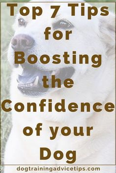 Shy Canine? Top 7 Tips for Boosting the Confidence of your Dog!   Dog Training Tips   Dog Obedience Training   Dog Training Commands   http://www.dogtrainingadvicetips.com/shy-canine-top-7-tips-boosting-confidence-dog #DogObidience