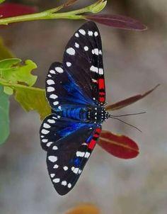 que estará planeando esta linda mariposa ? #butterflies