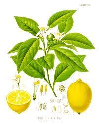 Lemon print?