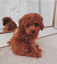 Dogs are the best pets ever and they know how to entertain their owner. Enjoy funny dogs that will make your day. Super Cute Puppies, Baby Animals Super Cute, Cute Little Puppies, Cute Little Animals, Cute Dogs And Puppies, Cute Funny Animals, Baby Dogs, Cute Babies, Doggies
