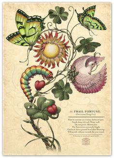 Maria Sibylla Merian 'Metamorphosis Insectorum Surinamensium' -   Maria Merian, creatoarea unora dintre cele mai frumoase ilustraţii ştiinţifice ale secolelor 17-18. Metamorphosis insectorum surinamensium – Transformările