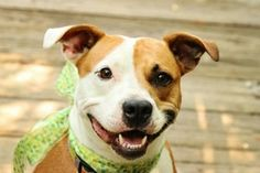 Alice has been adopted!