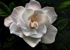 JoAnn McNeely Painting Plus...: Oil Painting Gallery