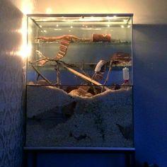 Beautiful gerbil set up.