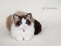 Needle felted Ragdoll cat by Po*Pisolino from Japan. She is extraordinary!