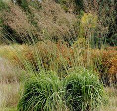 Molinia arundinacea 'Transparent' (Pijpestrootje) - p9