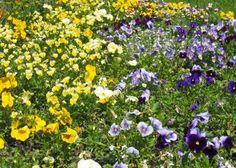 Todo jardim deve ser adubado? Com que frequência se deve usar fertilizantes?