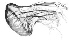 Medusozoa Art Print by Edward Blake Edwards | Society6