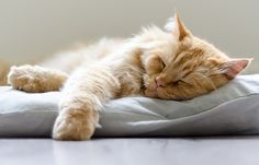 Sweet Dreams Cat by BauMon on 500px