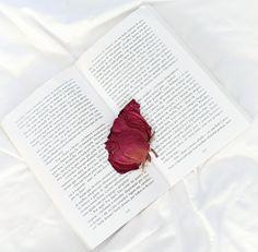 Livro aberto com rosa como marcador de página.