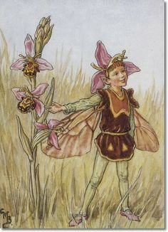 cicely Mary Barker - Flower Fairies of the Wayside - The Bee Orchis ...