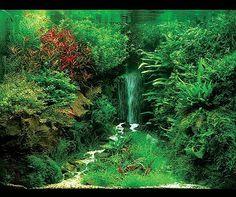 Amazing aquascapes