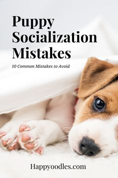 The benefits of a well socialized puppy are endless. Puppies that are properly socialized are easier to train, listen better and a joy to be around. For these reasons we want to make sure we socialize our dogs properly. But sometimes, even though we have the best of intentions, we still make mistakes during the socialization process. Here are 10 common puppy socialization mistakes people make that you should avoid. (#Puppysocialization, #howtosocializeyourpuppy, #Puppysocializationmistakes) Puppy Toilet Training, Big Dog Little Dog, Puppy Socialization, Puppies Tips, Cute Dog Photos, Sick Dog, Medium Dogs, Happy Animals, Dog Training Tips