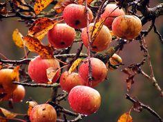 autumn-children:  Ацтцми