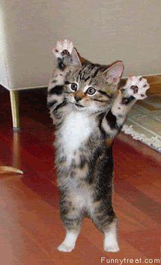 Kitty, Kitty, Kitty.