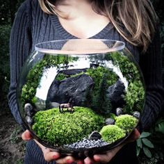 "Large bowl terrarium with ""invisible lid"" and horses in the pasture scene."