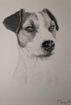 Terrier drawing, pencil hayleymorganart Commisions welcome! Www.hayleymorganart.webs.com
