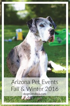 Upcoming dog friendly pet events in Arizona, fall and winter 2016.  Dog Mom | Pet Events | Local Arizona Events | Fall Pet Events