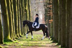 Dressage - surrounded by trees...would be fun to do with english rider also! or a hunter/jumper