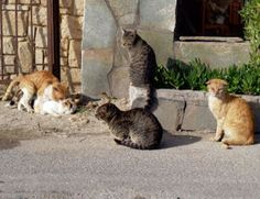 Ask Amy: Feral Cat: Feral Cats