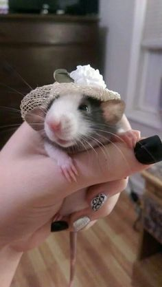 All dressed up-sweet ratty!
