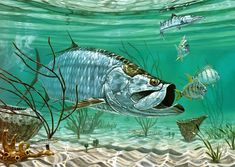Marquesas Keys Tarpon Art Print by Don Ray. All prints are professionally printed, packaged, and shipped within 3 - 4 business days. Choose from multiple sizes and hundreds of frame and mat options. Wildlife Paintings, Wildlife Art, Florida Fish, Fish Artwork, Watercolor Painting Techniques, Artist Painting, Fish Wallpaper, Fish Sculpture, Cool Paintings