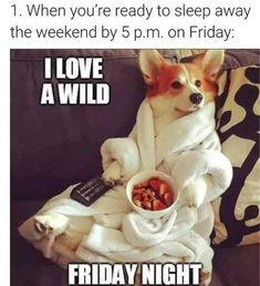 when you're ready to sleep away the weekend by 5 p. on friday, with a dog lying on the couch in a robe saying 'i love a wild friday night' Weekend Humor, Friday Humor, Happy Thursday, Happy Friday, Friday Night Quotes, Friday Nights, Stressed Meme, Old People Jokes, Job Memes