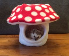 Turn your critters cage into a faerie garden by adding this mushroom shaped hide. Its soft fleece interior makes for the perfect sleeping place. Made out of Anti-pill Fleece and quilt batting. Hedgehog Care, Pygmy Hedgehog, Cute Hedgehog, Hedgehog Pet Cage, Cute Baby Animals, Animals And Pets, Cute Small Animals, Small Animal Cage, Amor Animal