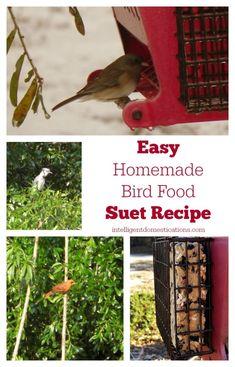 Easy Homemade Bird Suet Recipe   Intelligent Domestications