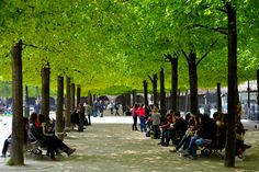 tree canopy w/ people underneath | Place des Vosges, Paris