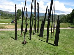 Trees of Aspen by Alan Sonfist Beach Pollution, Monterey Cypress, Forest Art, Sticks And Stones, Elements Of Art, Recycled Art, Art Club, Installation Art, Woodland