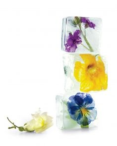 Here's a cool new way to savor the beauty of flowers: Freeze them in ice cubes to brighten drinks.  To suspend flowers in the cubes, work in layers: Fill a large-cube ice tray a quarter of the way with water, add flowers facing down, and freeze. Add water, freeze. Repeat. Use only edible flowers and cooled, boiled distilled water.