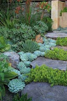 water friendly garden with stepping stones path                              …                                                                                                                                                                                 More