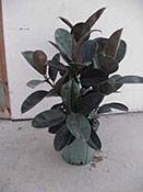 Houseplant Needs - Houseplants - University of Illinois Extension