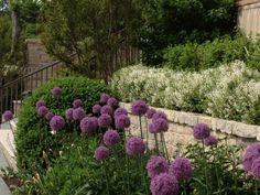 Spring garden Hedges Landscaping, Terraces, Spring Garden, Landscape Design, Plants, Decks, Landscape Designs, Terrace, Plant