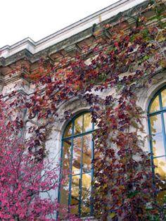The Urbana Free Library on Race St. Urbana, IL. Urbana Illinois, Stuff To Do, Things To Do, Central Illinois, Free Library, Alma Mater, Fall Photos, Autumn Trees