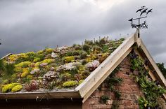 Lakeland green roof by Wildroof #Green_Roof #Wildroof