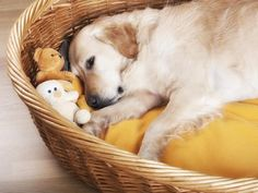 Give pets plenty of toys to keep their teeth from tearing into doors, baseboards, furniture and other valuables >> http://www.hgtv.com/decorating-basics/cute-pets-in-our-favorite-spaces/pictures/index.html?soc=pinterest