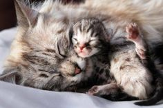 Cute cats Photo. A sweet momma's love for her adorable baby!!