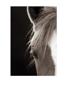 Art Addiction Horse, Left, http://www.myhabit.com/redirect?url=http%3A%2F%2Fwww.myhabit.com%2F%3F%23page%3Dd%26dept%3Dhome%26sale%3DA1Q3AAASWN0PFU%26asin%3DB009ZPYCYG%26cAsin%3DB009ZPYCYG