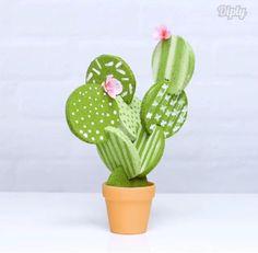 Coasters off a cactus