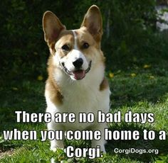 It doesn't matter how bad your day had been.  At the end of the day, you know you can go home to your Corgi and feel okay!  Say yes, if you can relate:)    Sign up for The Daily Featured #Corgi - http://bit.ly/DailyCorgi