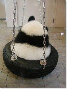I wanna cuddle! Pretty Animals, Super Cute Animals, Cute Funny Animals, Cute Baby Animals, Animals Beautiful, Panda Bebe, Cute Panda, Photo Panda, Baby Panda Bears